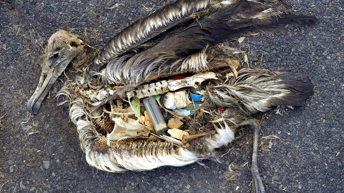 Bilderesultat for plast fugl