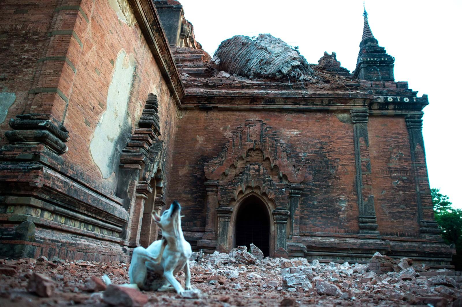 Her ser vi ødeleggelser på pagoden Sulamani i Myanmar den 25. august. Landet ble rammet av et jordskjelv med styrke 6,8 den 24. august. Flere mennesker ble drept og nesten 200 pagoder fikk skader i den berømte oldtidsbyen Bagan, kjent for sine over 2000 templer og pagoder. Sulamani er et buddhistisk tempel fra 1183.