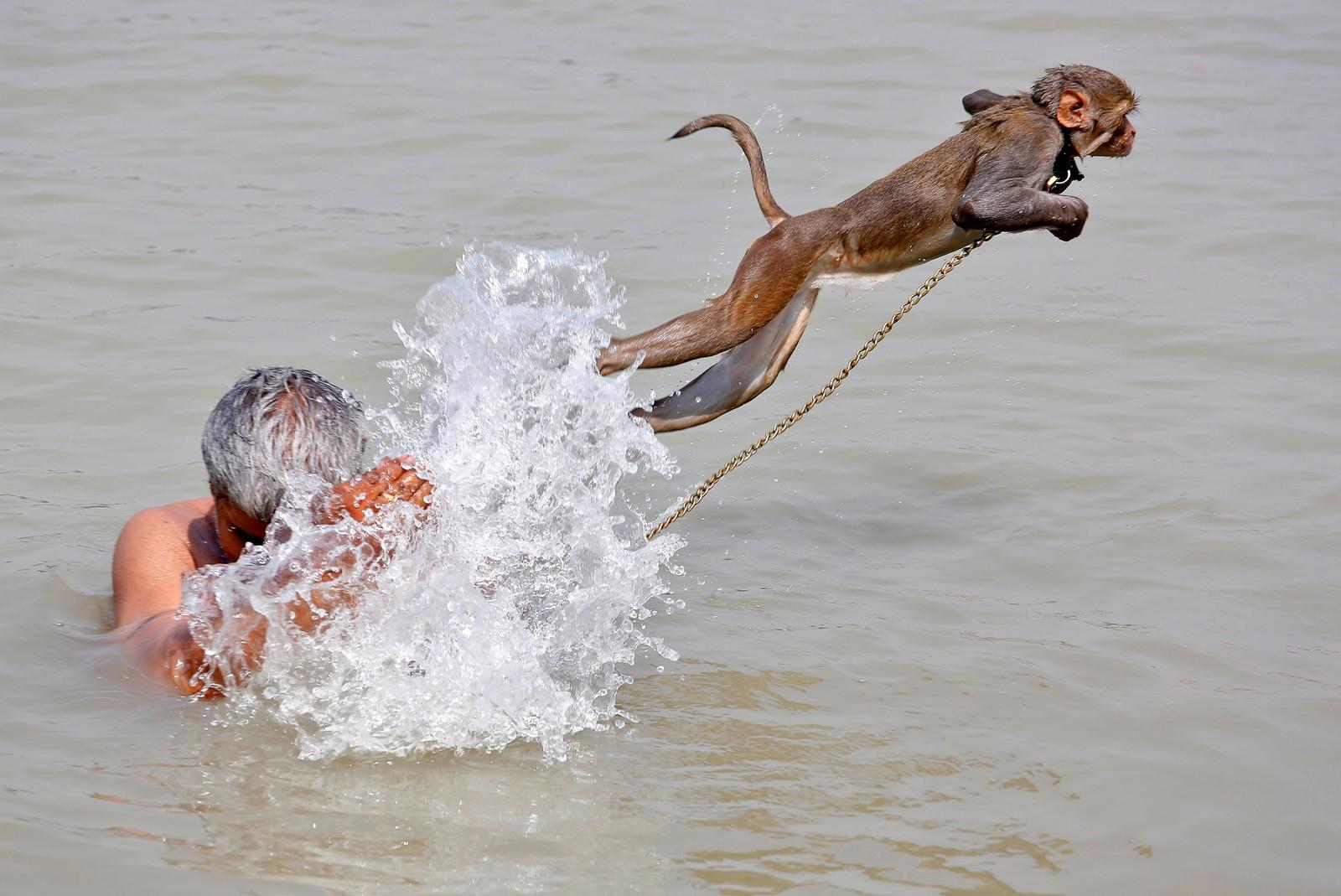 En mann og kjæleapen Ramu bader i elven Ganges i Kolkata i India.