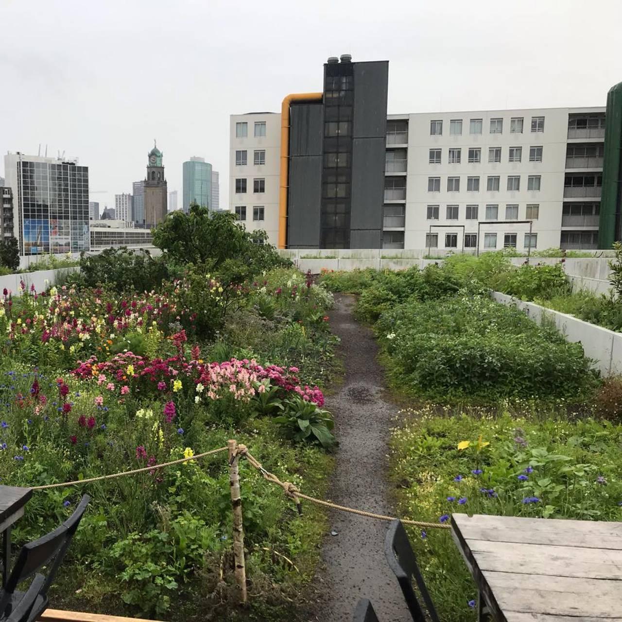Det blomstrer på taket i Rotterdam