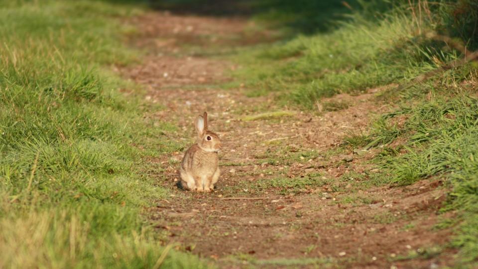 Haren vinner et løp