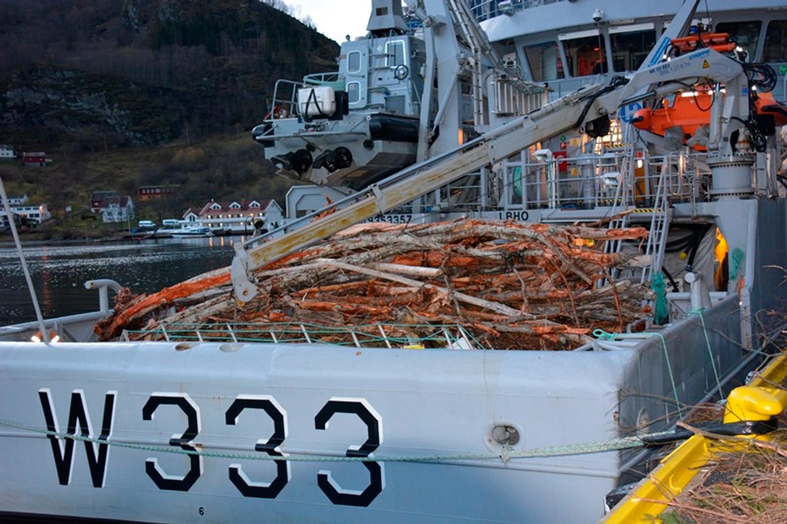 FULLT: Kystvaktskipet har plukka opp mykje rekved frå Aurlandsfjorden.