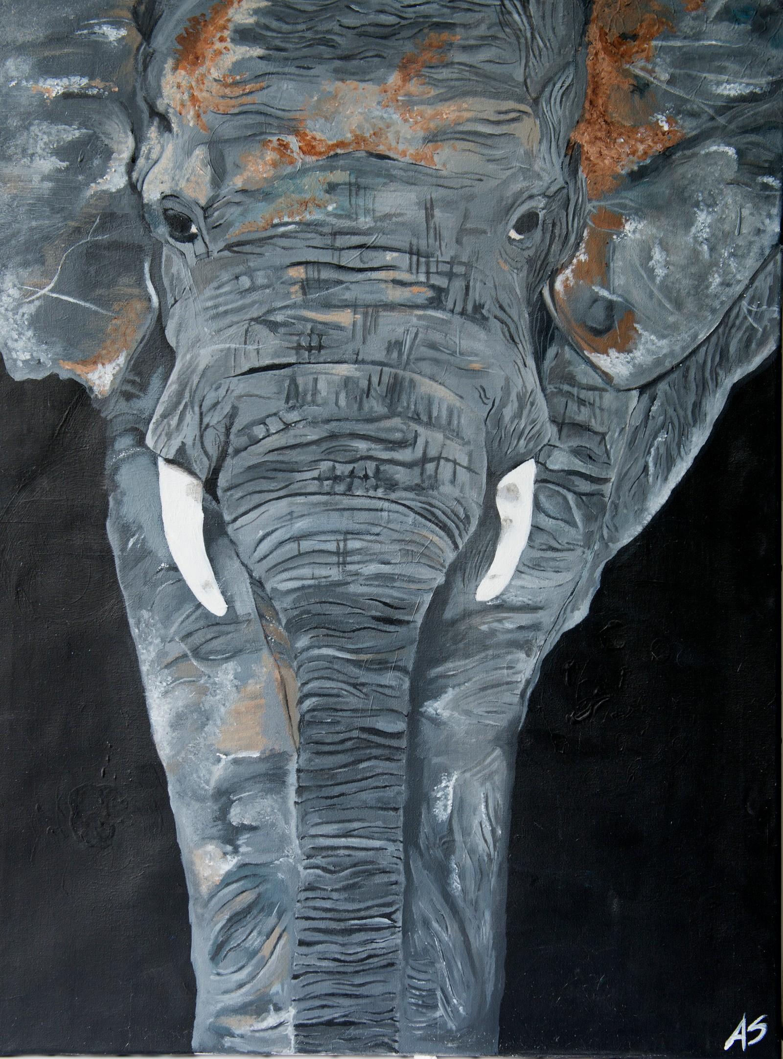 Elephants never forget - Anna Sofie Hellebø Moe, Flora