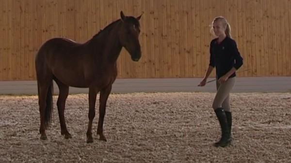 Det er hardt arbeid å ha hest!
