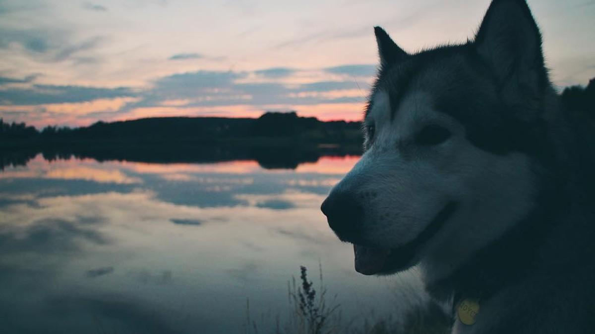 Hund i hundedagane - Foto: @benedickte/Instagram