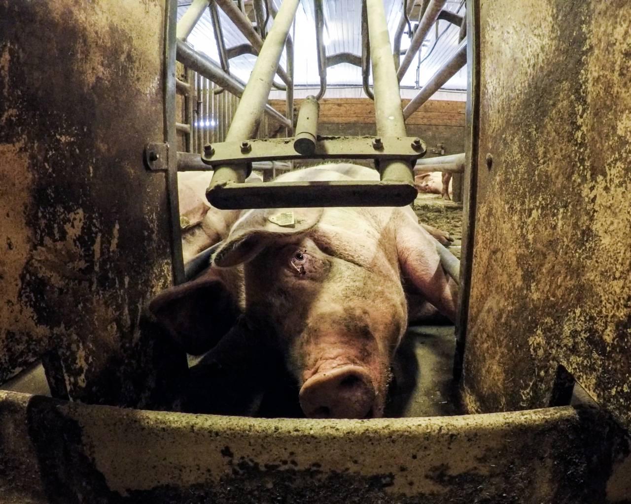 Bilde fra «Griseindustriens hemmeligheter»