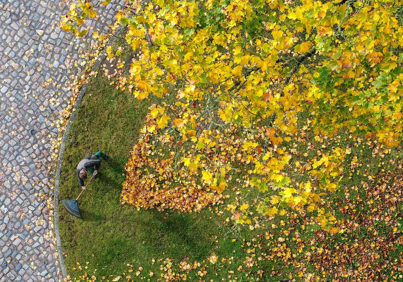 Høst i Sieversdorf i Tyskland. Bilde ble tatt med hjelp av en drone.