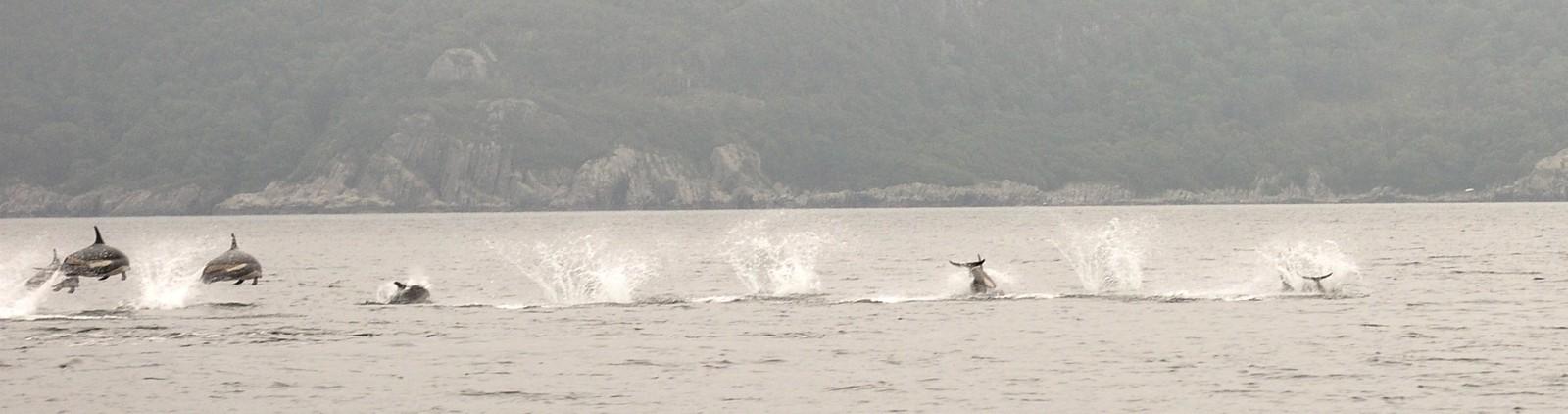 Silje Jakobsen Østhus mener det var nærmere 100 delfiner i stimen utenfor Flekkefjord.