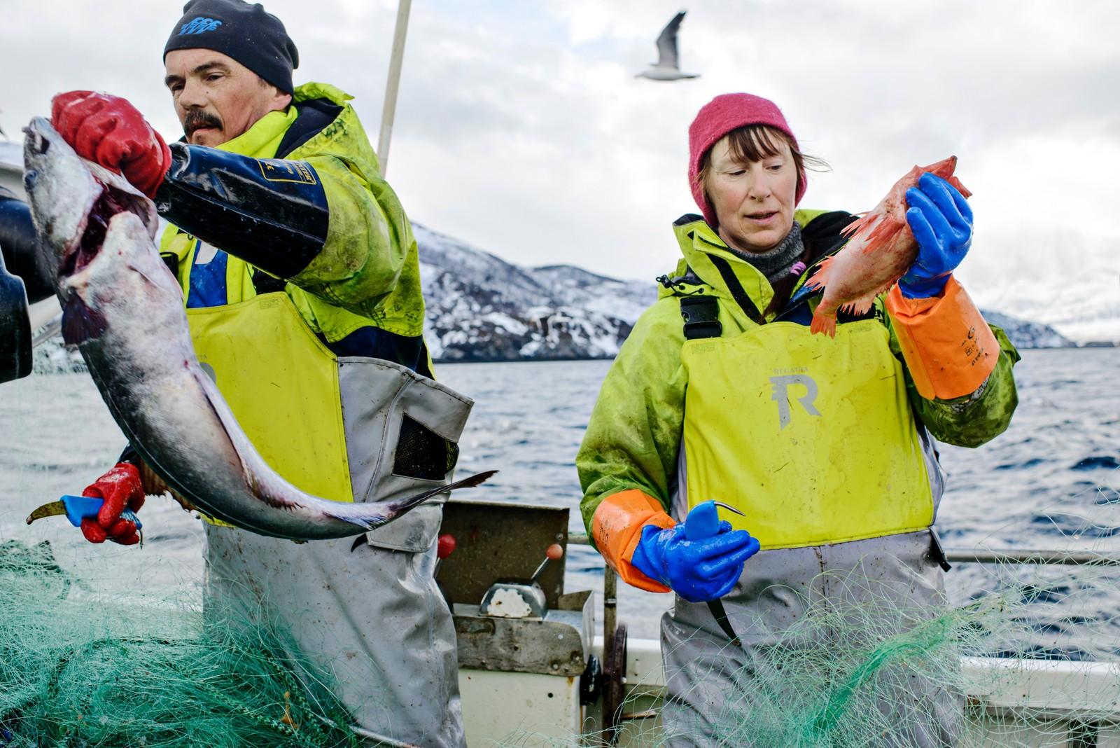 2. plass Klima og miljø: Katinka Hustad, frilans / Dagens Næringsliv. Kampen om havet: I årtier har ekteparet Trond Isaksen og Sigrid Iversen fisket i Kvænangsfjorden i Troms, men nå er levebrødet truet. Siden 1998 har Norge mer enn tredoblet sin produksjon av oppdrettslaks. Går alt etter planen, skal produksjonen femdobles innen 2050 – og nå har verdens største oppdrettsselskap, Marine Harvest, funnet veien hit.