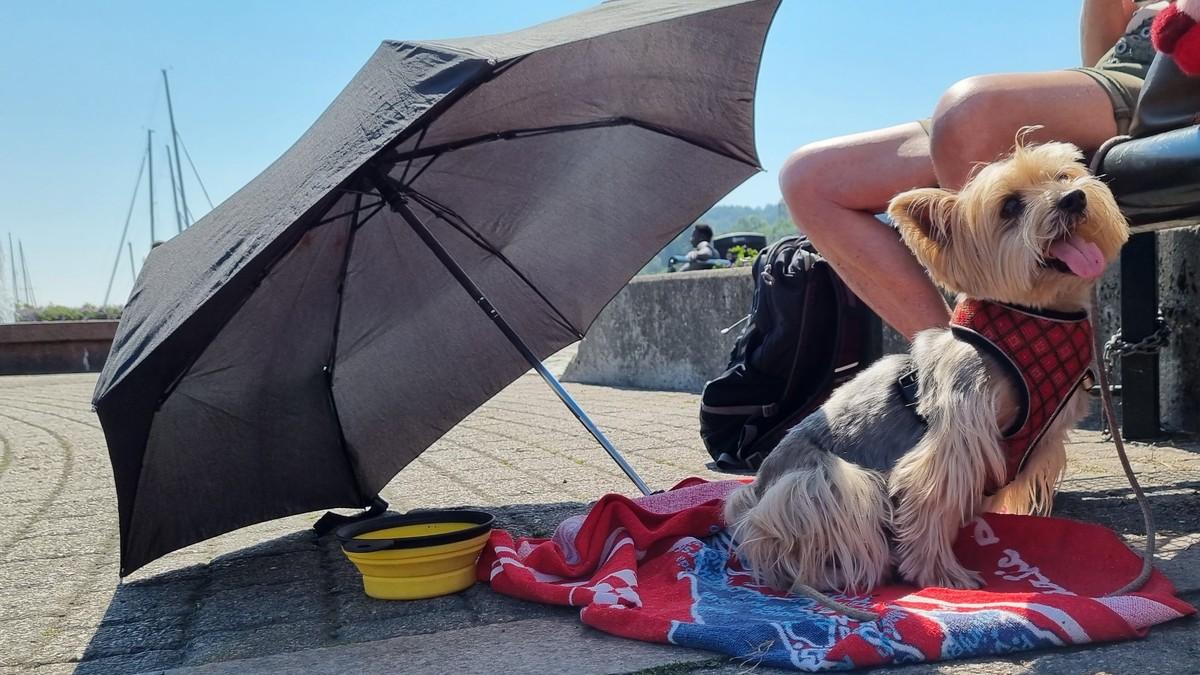 Hunden Pepe i Kristiansand