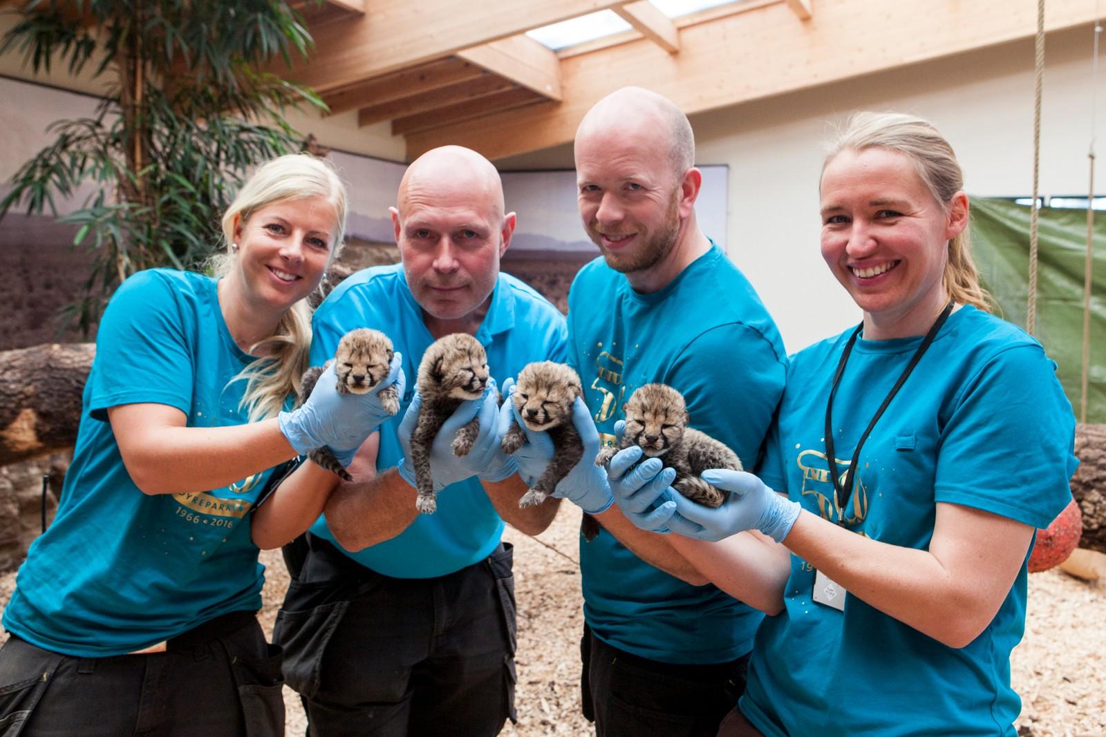 Dyrepasserne som skal jobbe med gepardene fremover Lisbeth Langevold, Olav Åsland, Trygve Torkildsen og Monica Wiig.