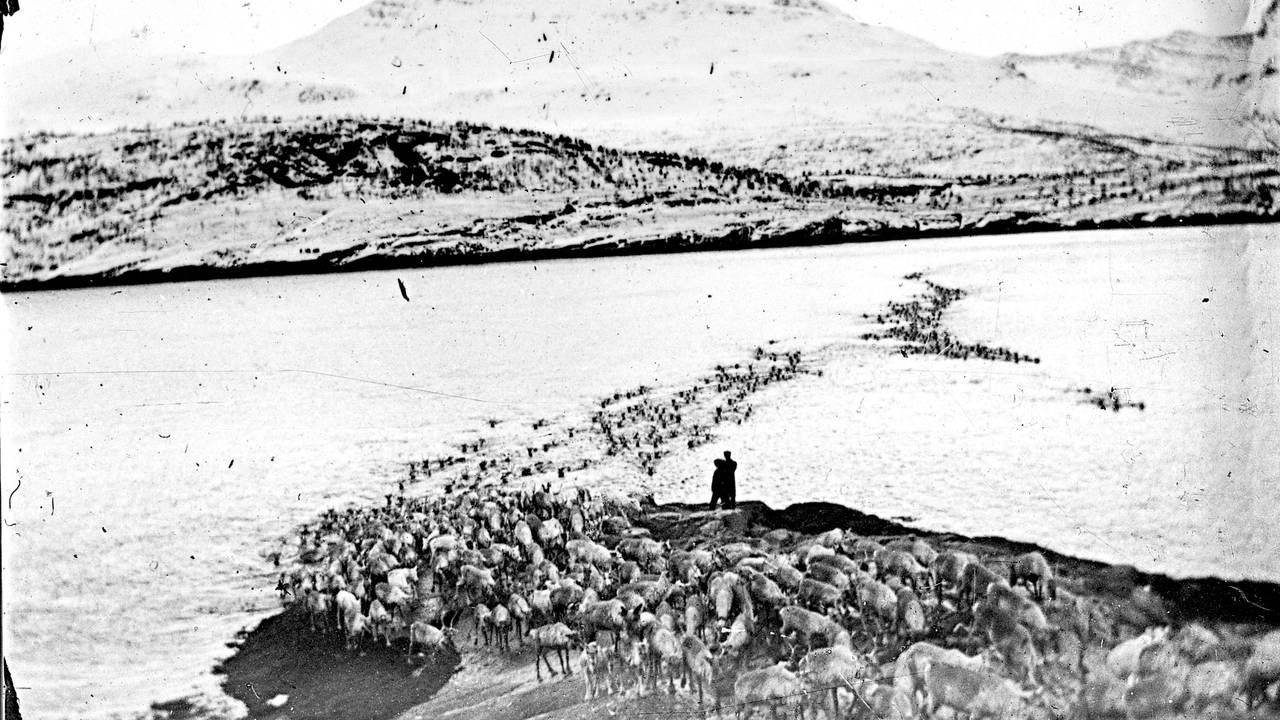 Rávdnji/Straumen, i nærheten av det stedet der reinsdyrene pleide å svømme over fra fastlandet ut til Sállir/Kvaløya. Fra boken «Herrene sendte oss dit. Om tvangsflyttingen av samene» av Elin Anna Labba