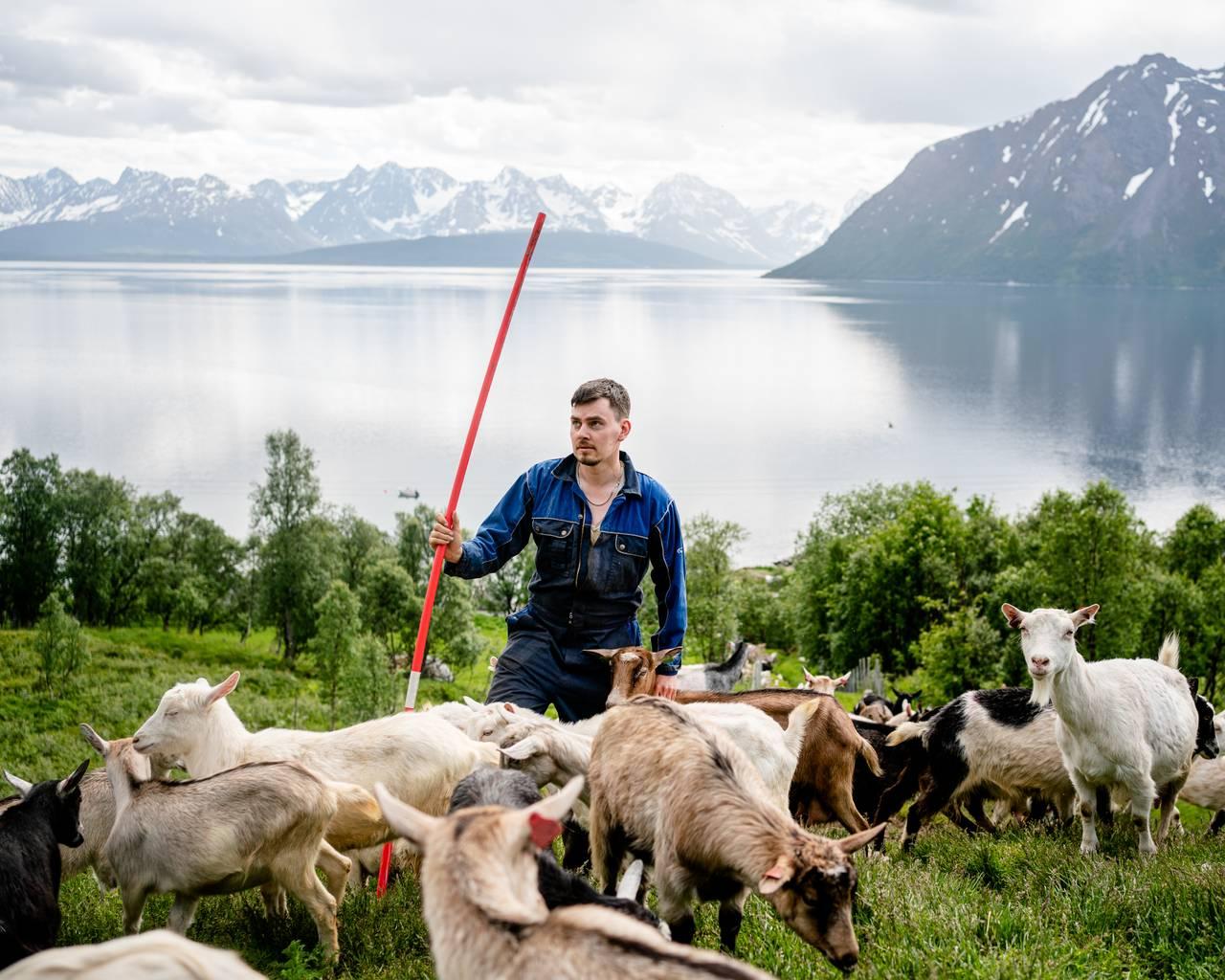 Christian står med store deler av geiteflokken med vann og fjell i bakgrunnen.