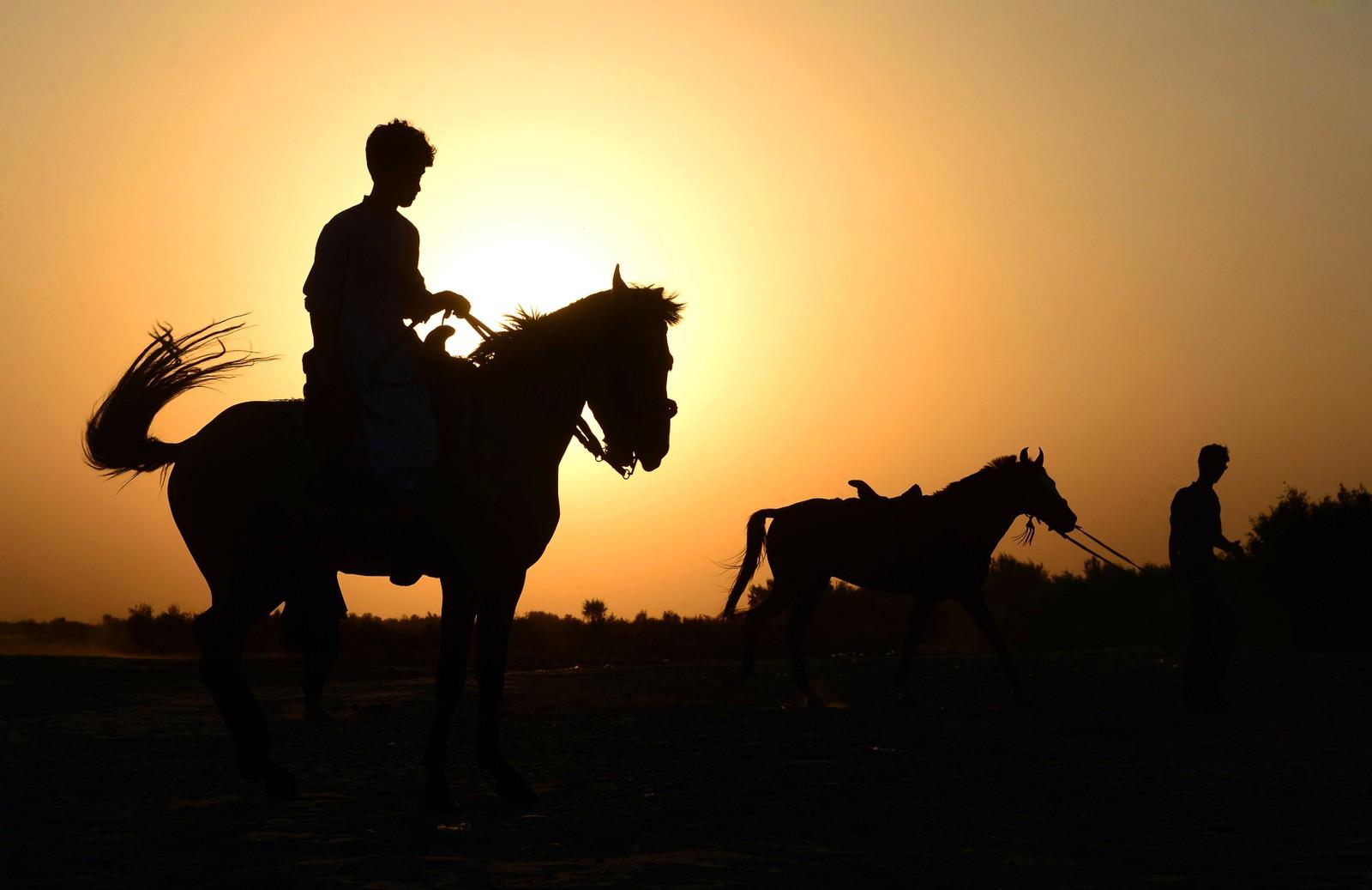 To menn og to hester i solnedgangen i Herat i Afghanistan den 28. juli.