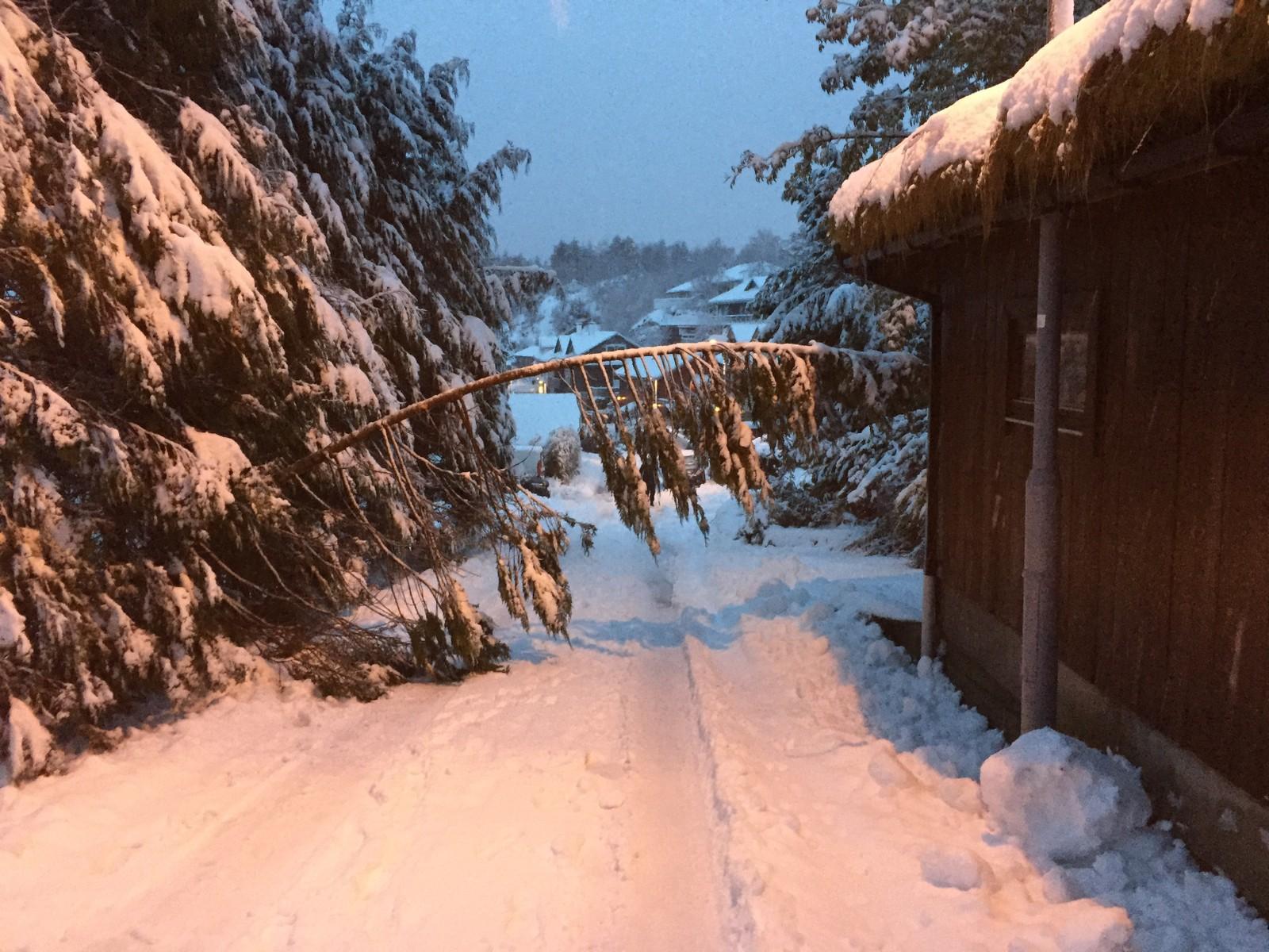 LAKSEVÅG: Slik så det ut i Øvre Riplegården på Laksevåg. Treet er nå fjernet.