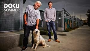 Dokusommer: Louis Theroux: Et hundeliv i LA