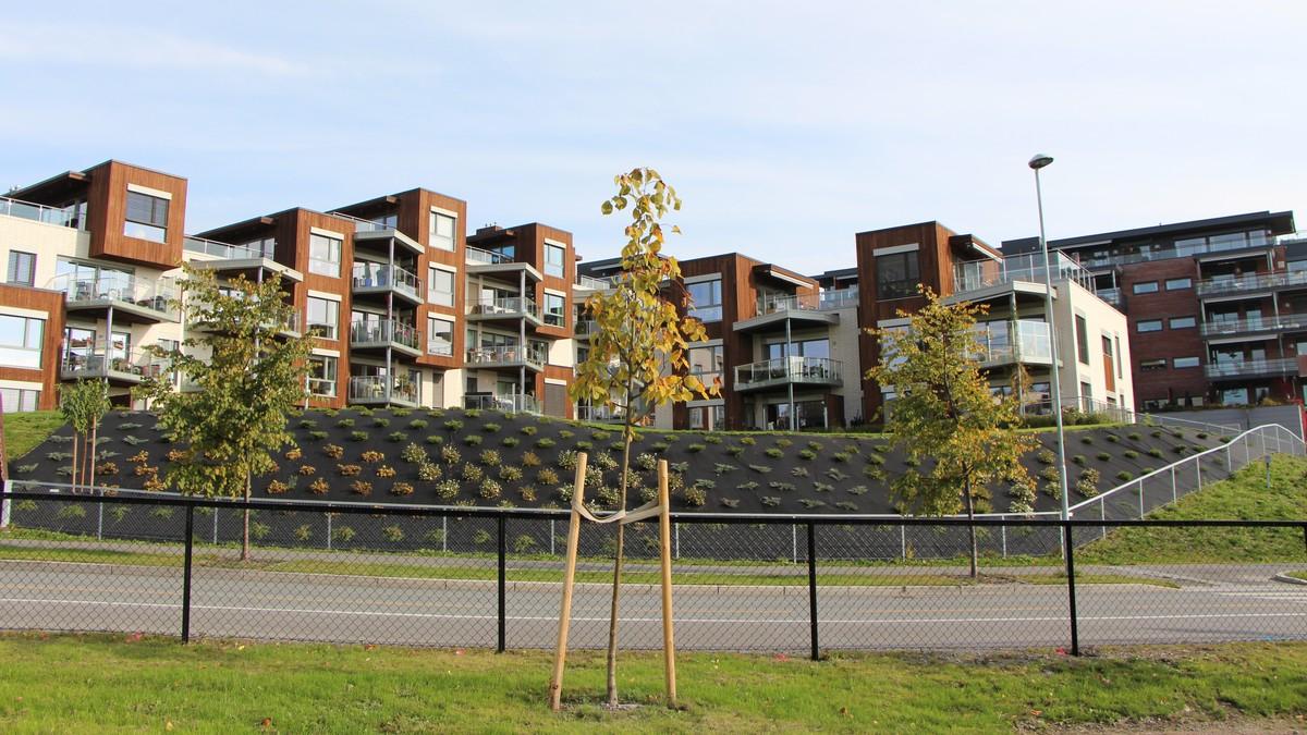p3 norge Hamar