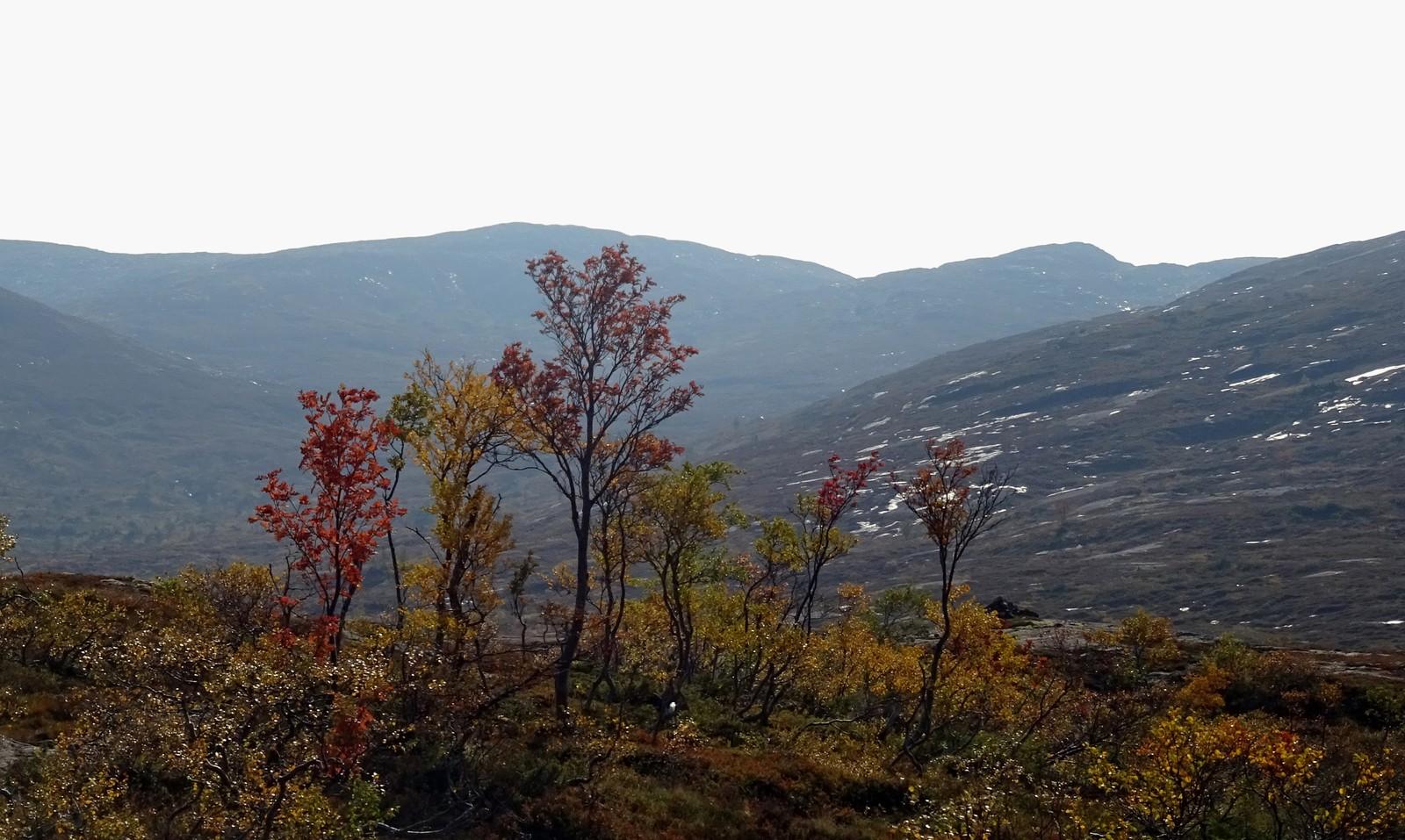 Høstfarger i varmedis, Snasadalen