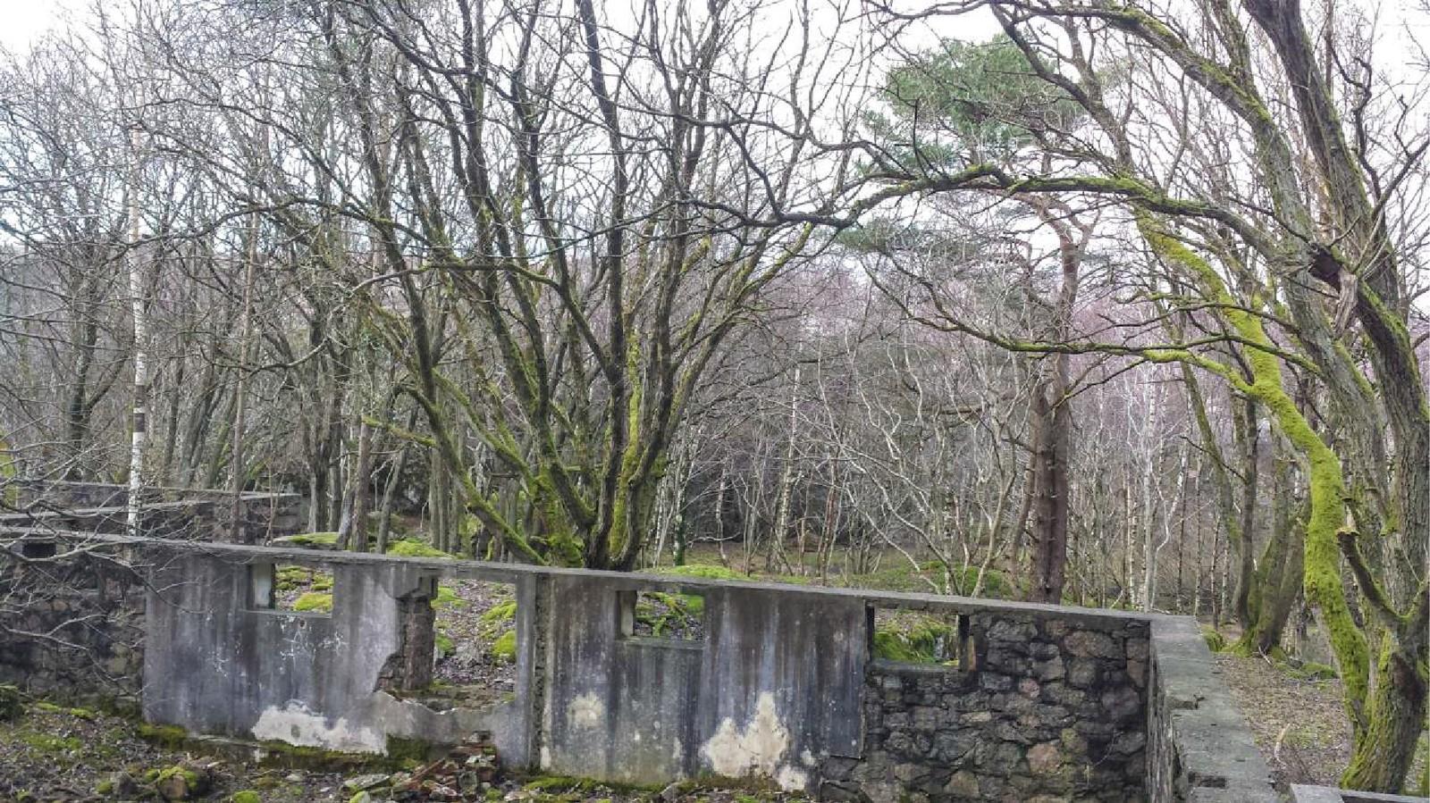 Trær og vegetasjon er i ferd med å ødelegge viktige krigsminner på Helgøya i Søgne.
