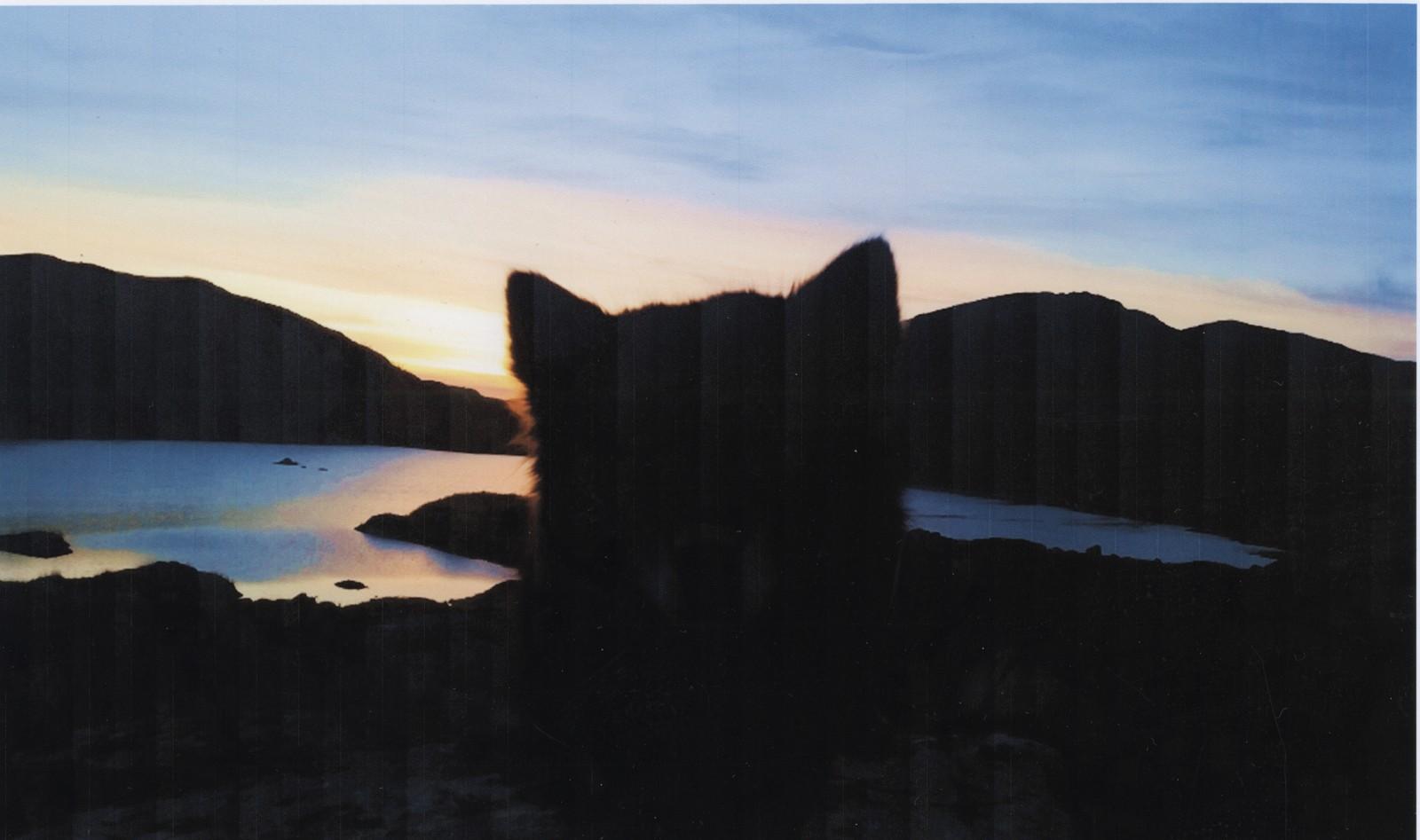 Solnedgang bak ørene - Hedda Andrine Skår Indrebø, Høyanger