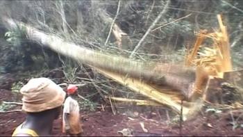 Video – Oljefondets investeringer ødelegger regnskogen