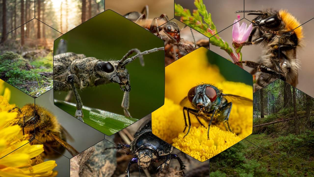 Bildemosaikk satt sammen av mange forskjellige insekter.