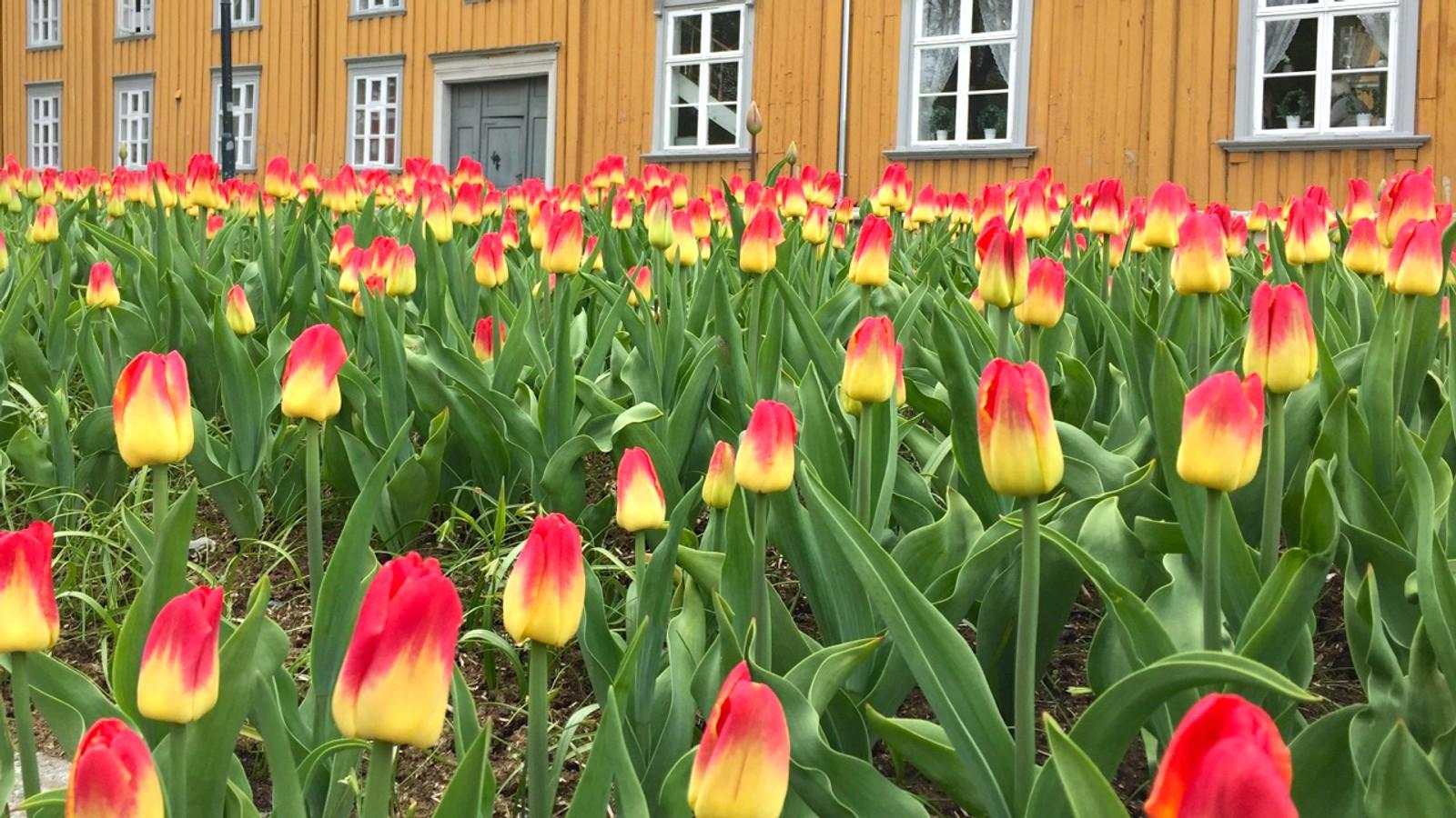 Blomstringstid ved Hornemannsgården