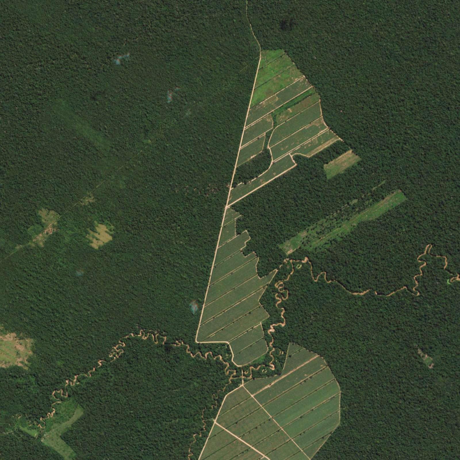 Satellitt-bilde fra Bolivia viser skog og landbruksareale før hogsten startet.