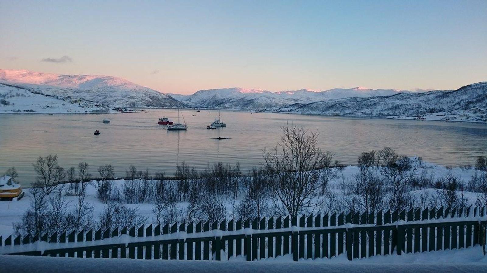 Bildene er fra Kvaløyvågen i Tromsø.