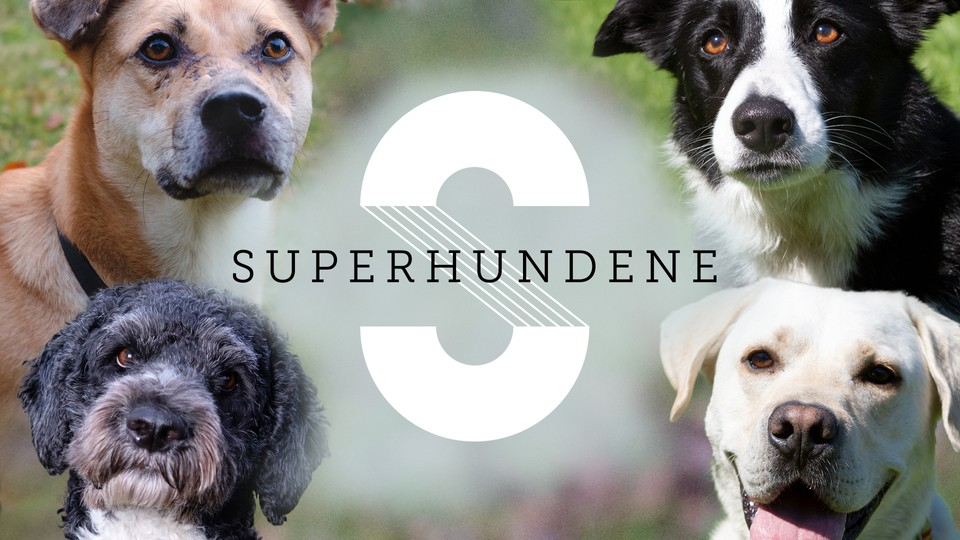 Superhundene