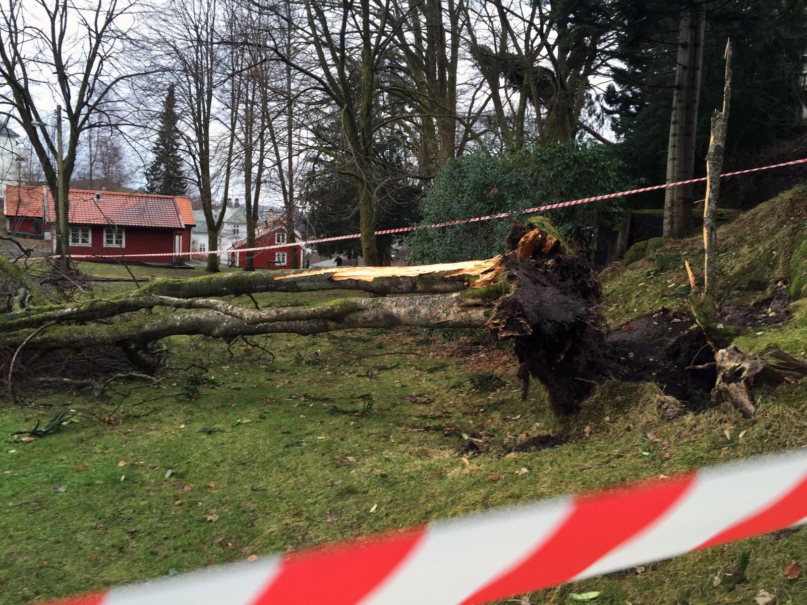 Leaparken i Bergen har fått hard medfart. Her ligger det både trær og strømledninger på bakken.