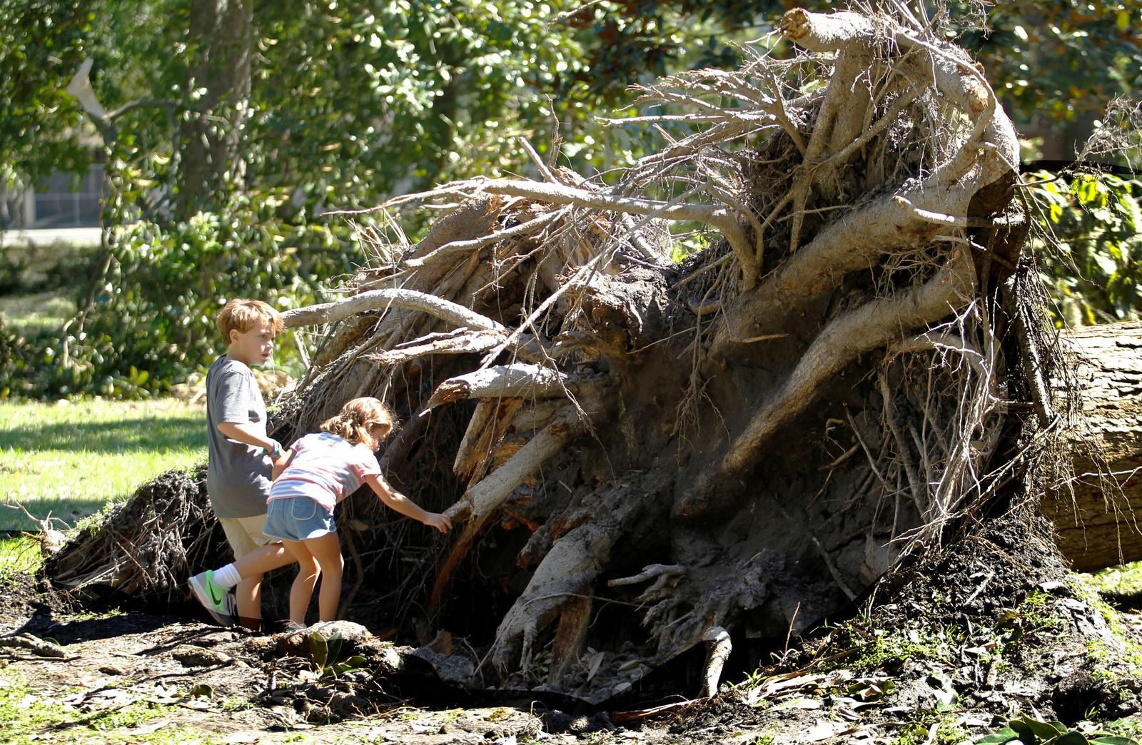 Ti år gamle Jack Terry og søsteren Bailey ser på et tre som har blitt blåst overende i Forsyth Square, Georgia søndag.
