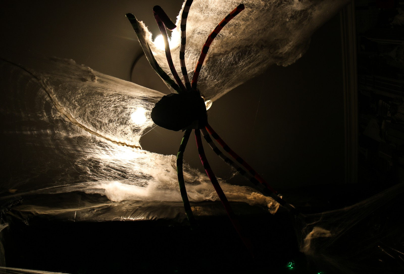 Edderkopp i taket.
