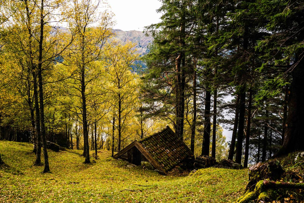 Naturbilder fra Havrå, høsten 2020
