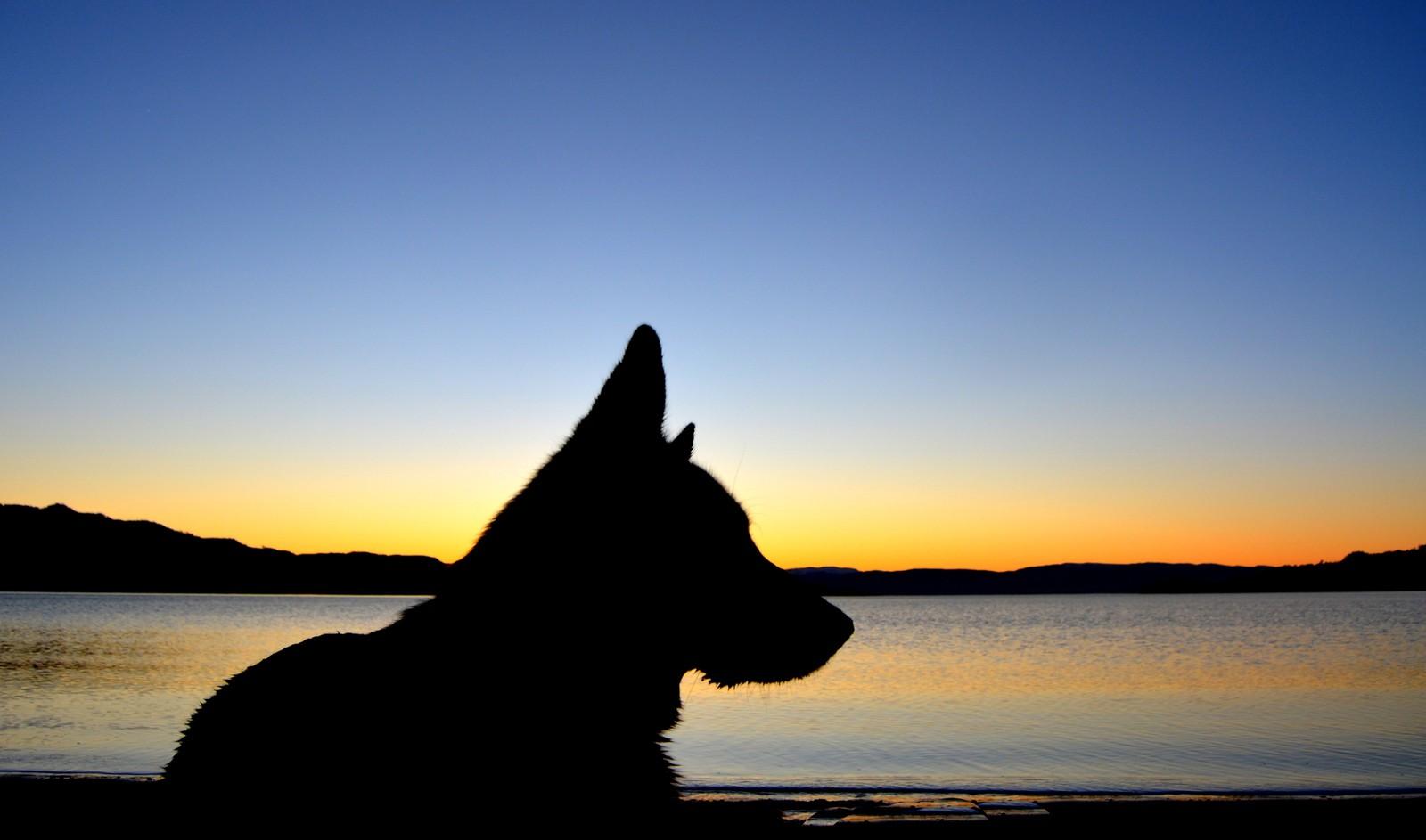 Sunset Dog – Øysand, Gaulosen