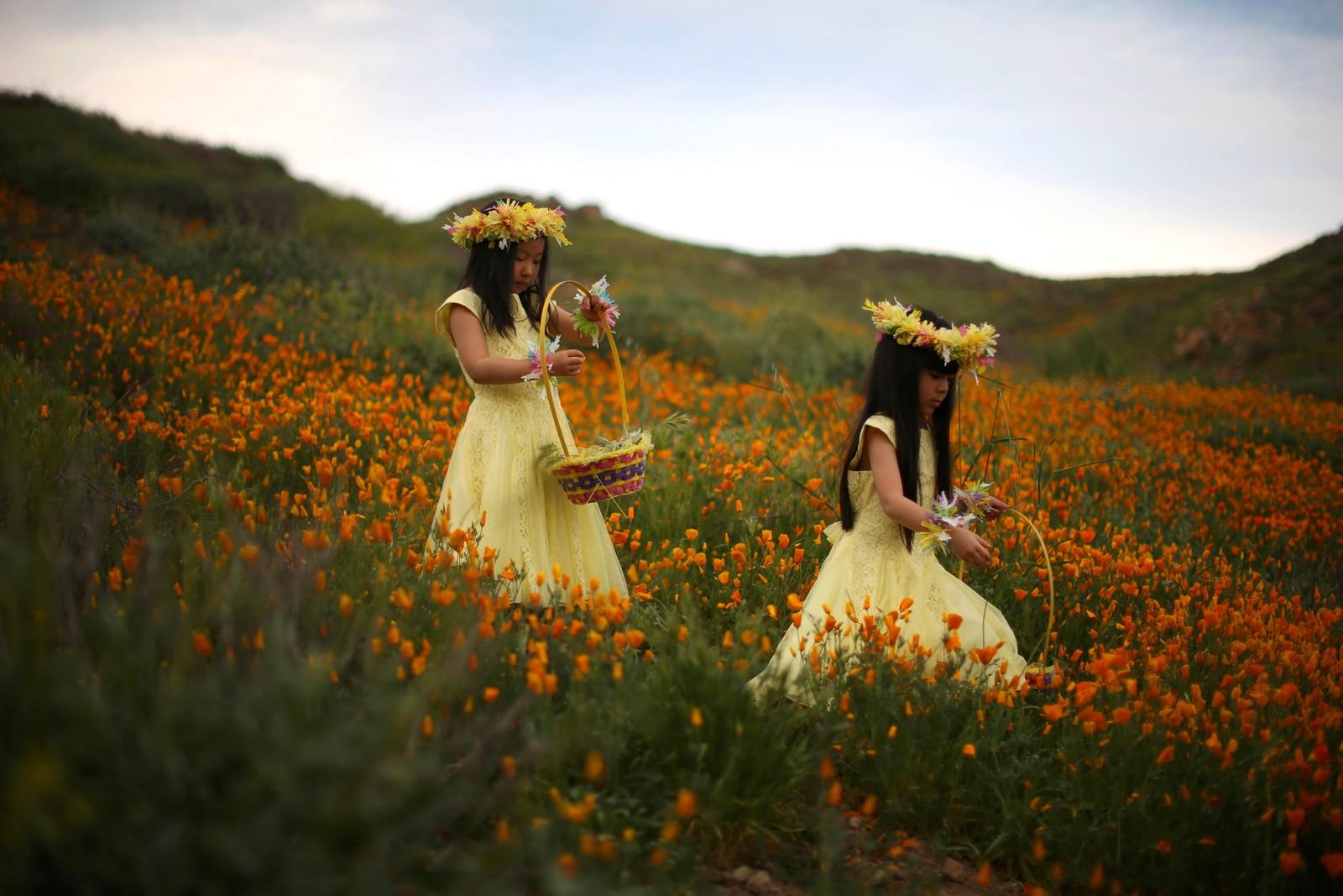 Julia Lu og Amy Liu, begge fem år gamle, går gjennom en blomstereng i Lake Elsinore i California.