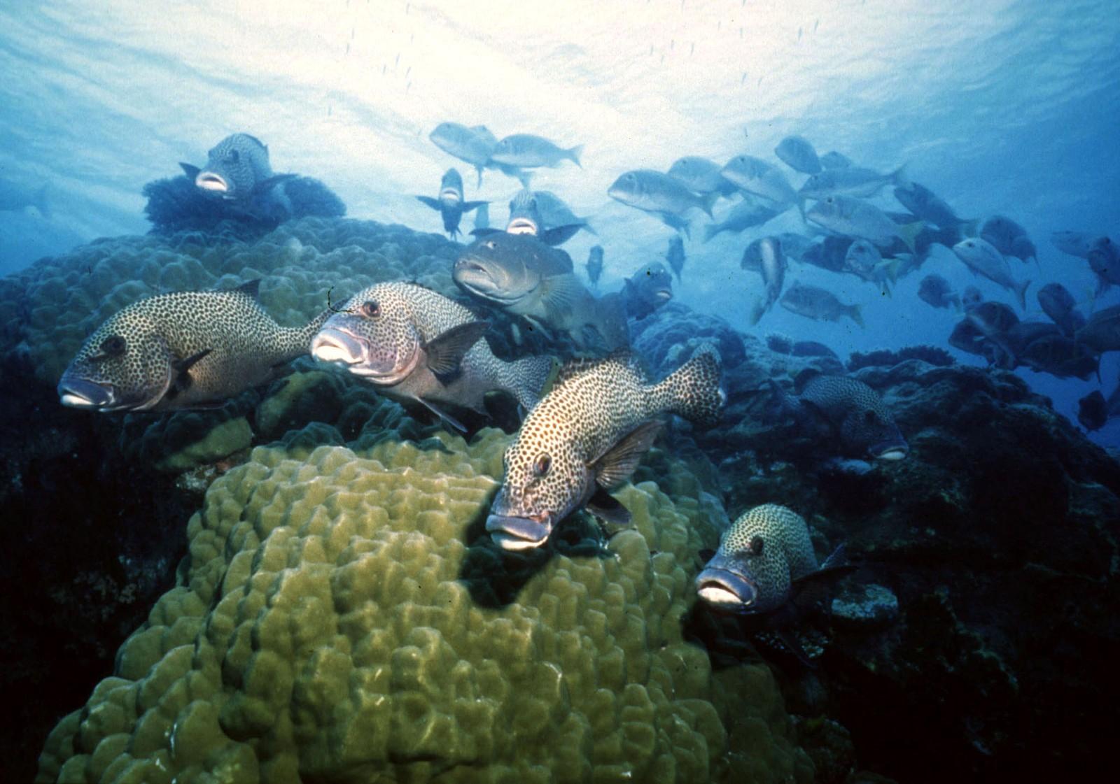 Rund 10 prosent av verdens fiskearter finnes på Great Barrier Reef. Økosystemet er truet av global oppvarming mener forskere.