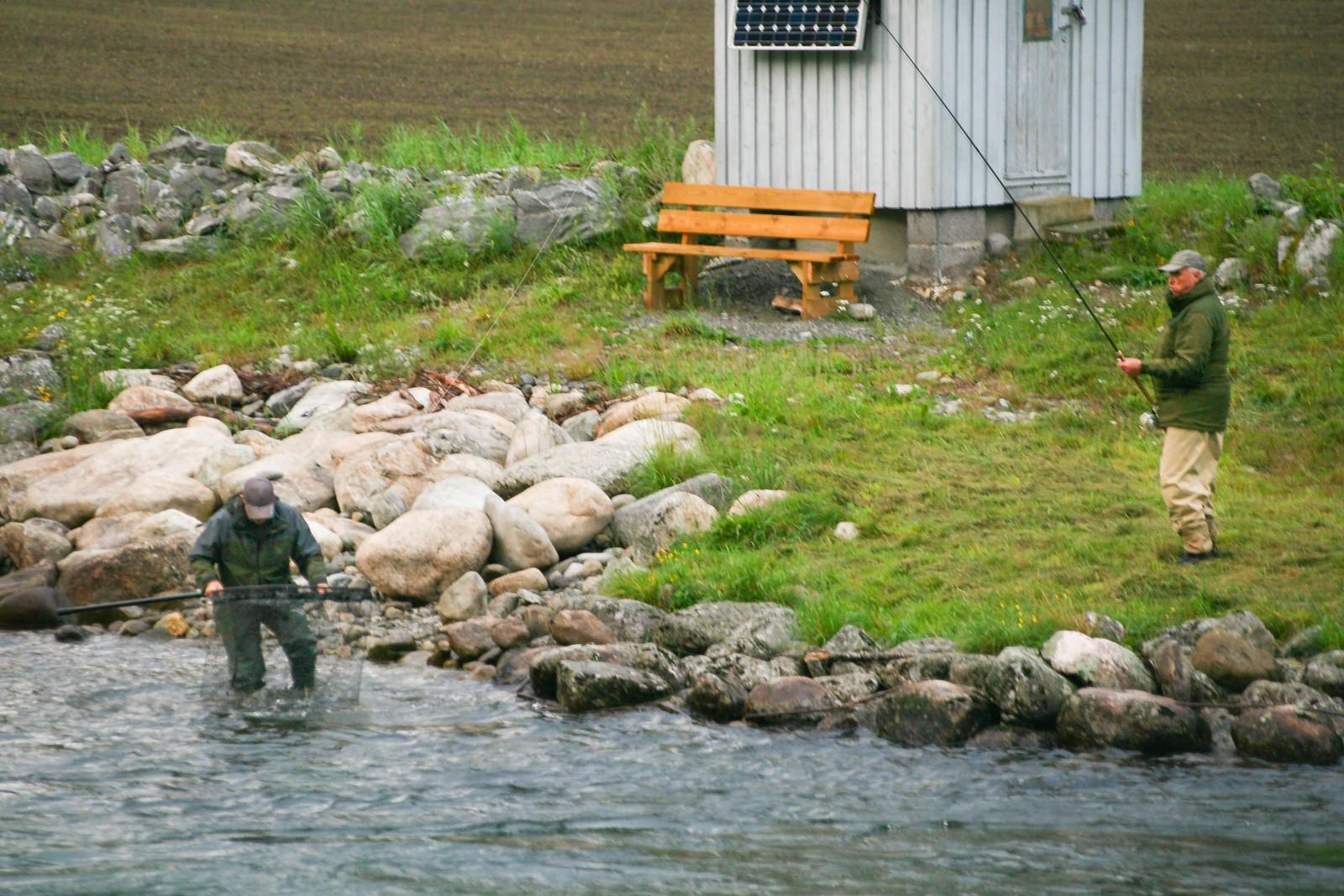 Kong Harald pustar ut når klepparen kan konstatere at fisken er i hoven.