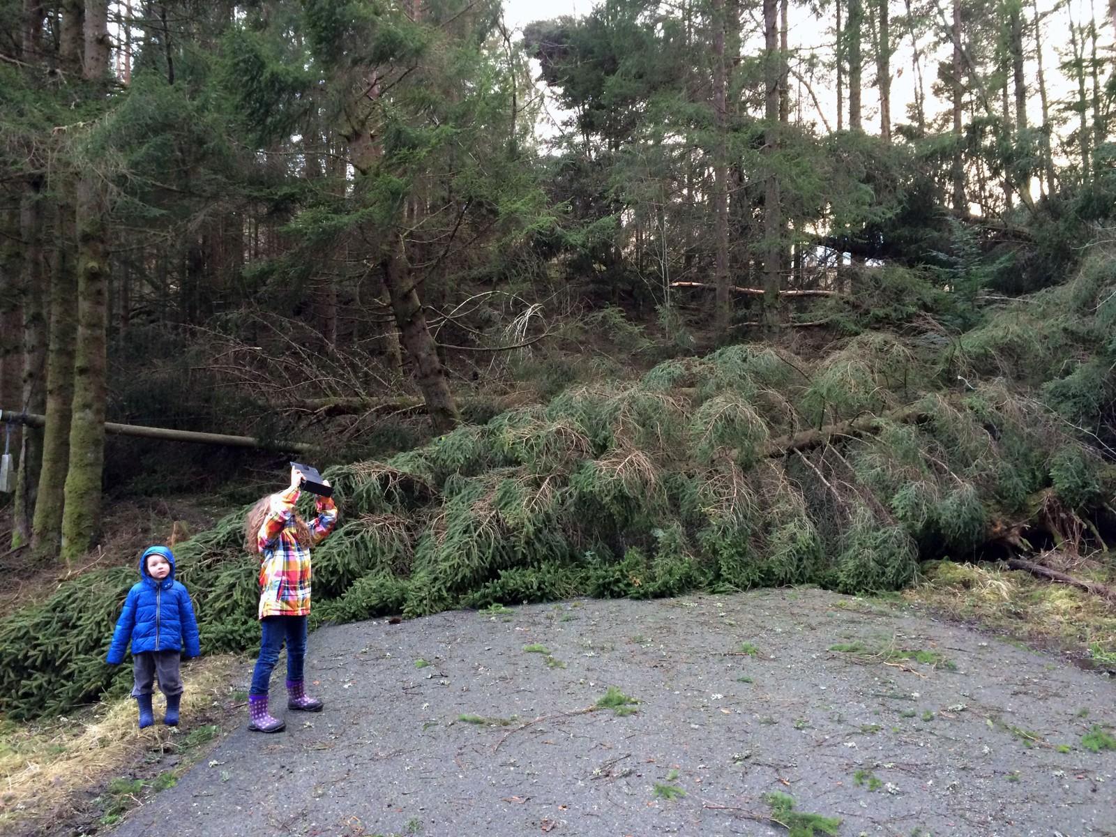 Spesiell søndagstur. Trær over hele fylket ligger nede, og mange er ute på tur for å se på skadene.