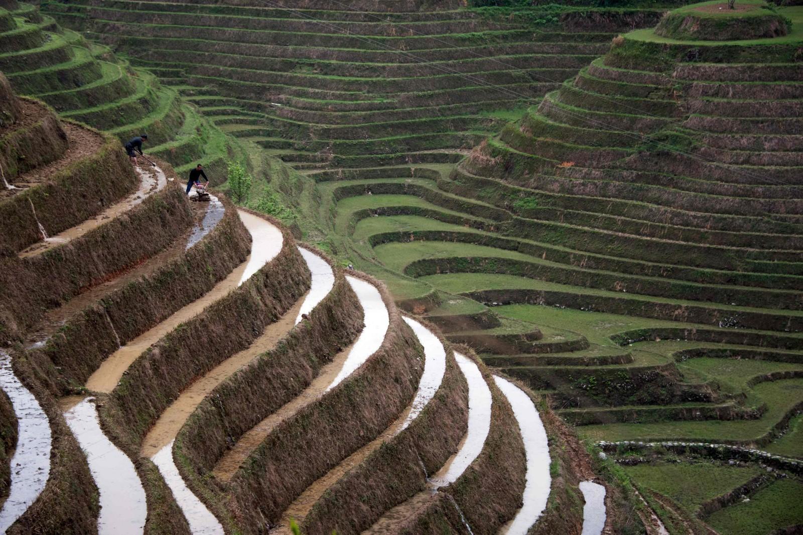 TERRASSE-RIS: To bønder jobber på rismarkene ved landsbyen Tiantou i Longsheng sør i Kina.