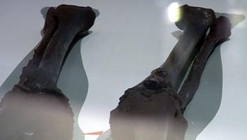 Skjeletter fra vikingetiden