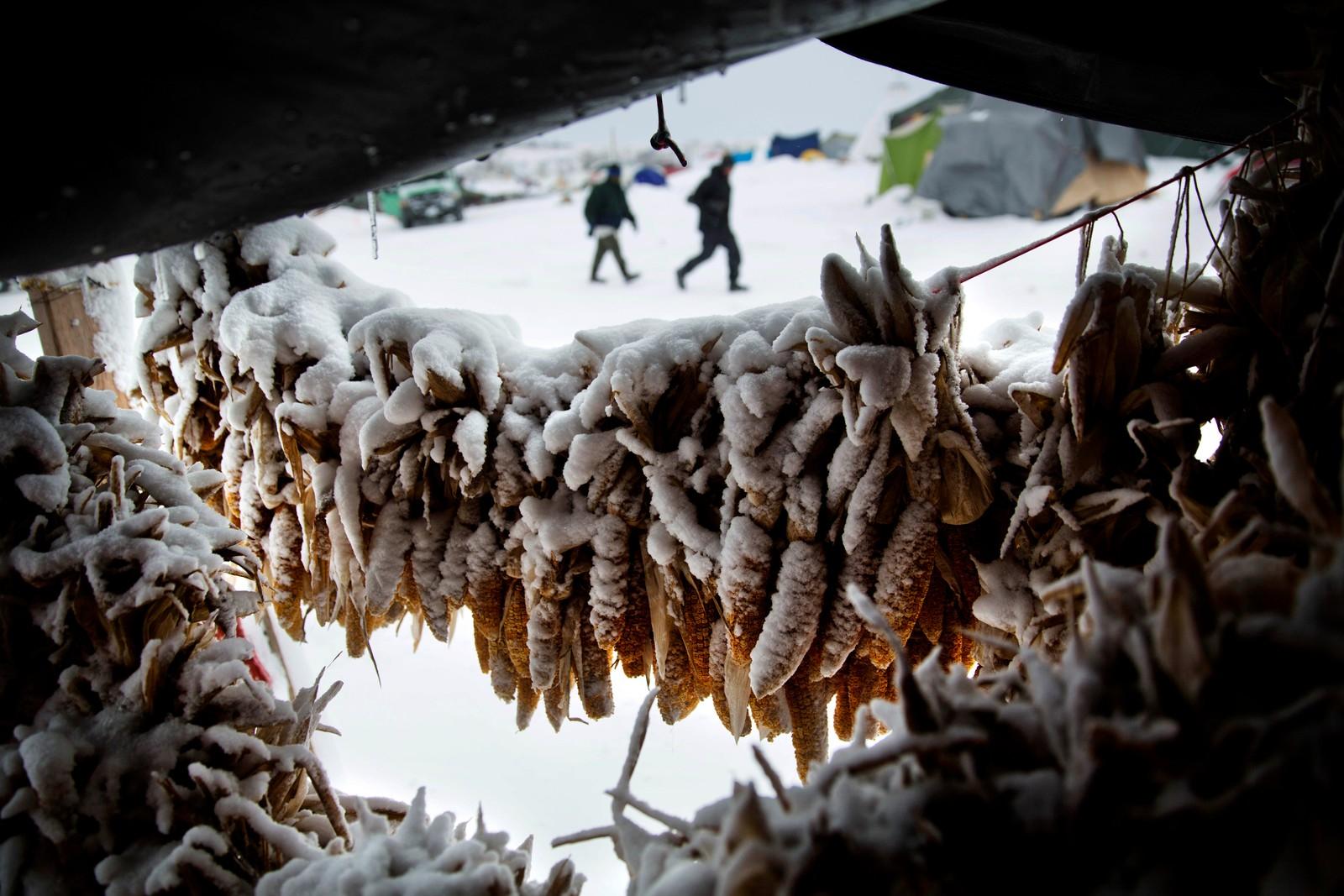 """Mais dekket av snø henger utenfor et telt ved Oceti Sakowin-leiren i Nord-Dakota hvor folk har samlet seg for å protestere mot byggingen av oljeledningen """"Dakota Access Pipeline"""", også kalt """"Den svarte slange"""". Det er planlagt at ledningen skal bli 1900 kilometer lang, og at den skal gå helt fra Nord-Dakota til Illionois i USA."""