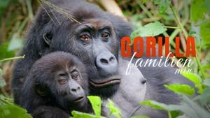 Gorillafamilien min