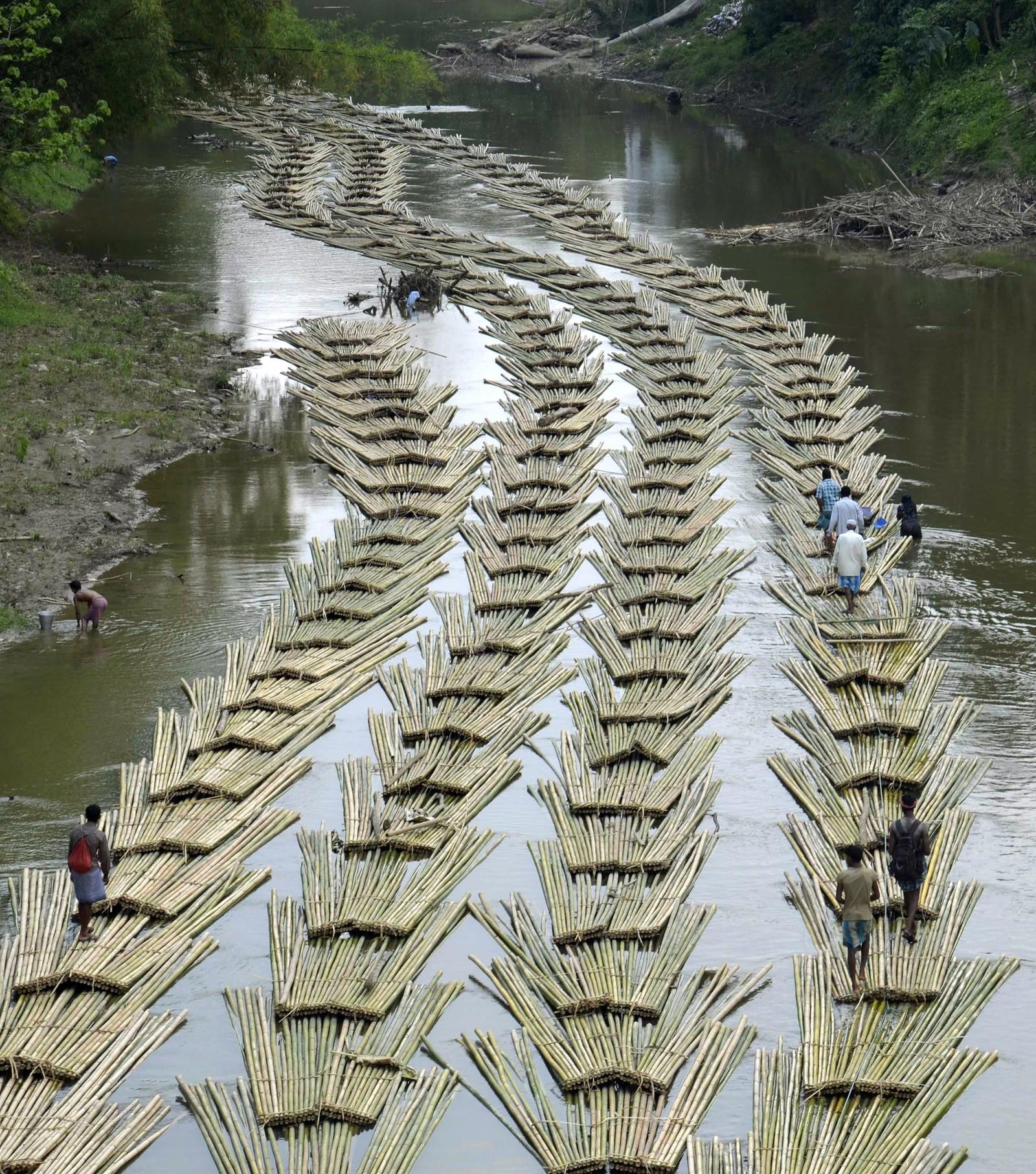 Et hav av bambus på elva Longai i Bangladesh.