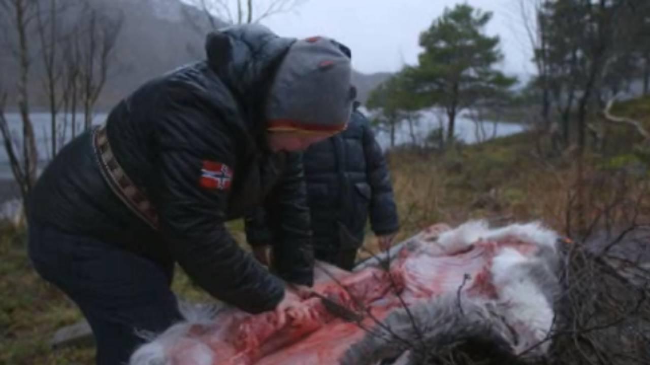 Maret Ravdna Buljo slakter en rein