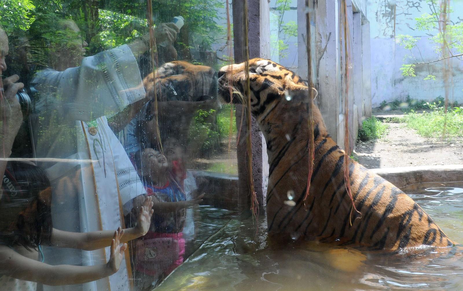 En katolsk prest velsigner en tiger med hellig vann i dyrehagen Malabon Zoo i Manila i forbindelse med verdens dyredag. Tradisjonen ble startet i Firenze i Italia i 1931 for å øke oppmerksomheten rundt utrydningstruede dyrearter.