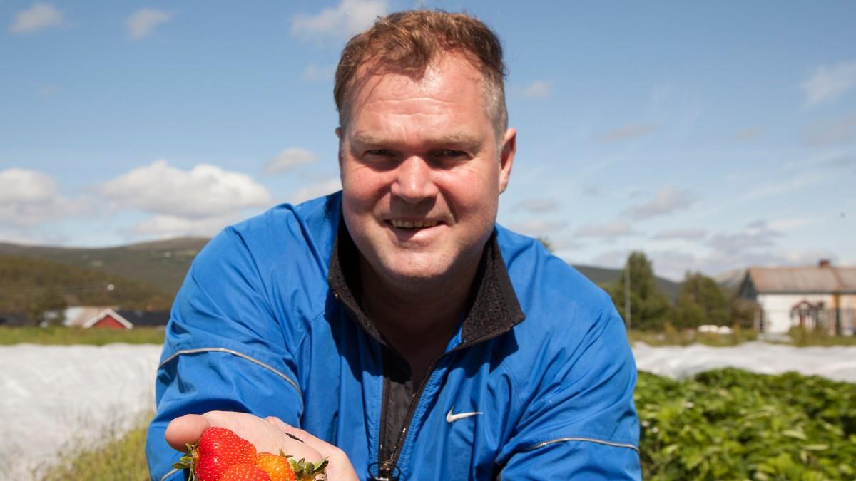 Kulderekord er ingen problem for jordbærbonden