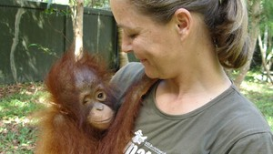 Orangutang-kvinnen