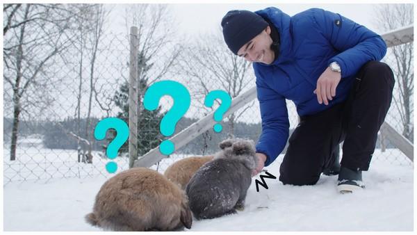 Snø kaniner dating