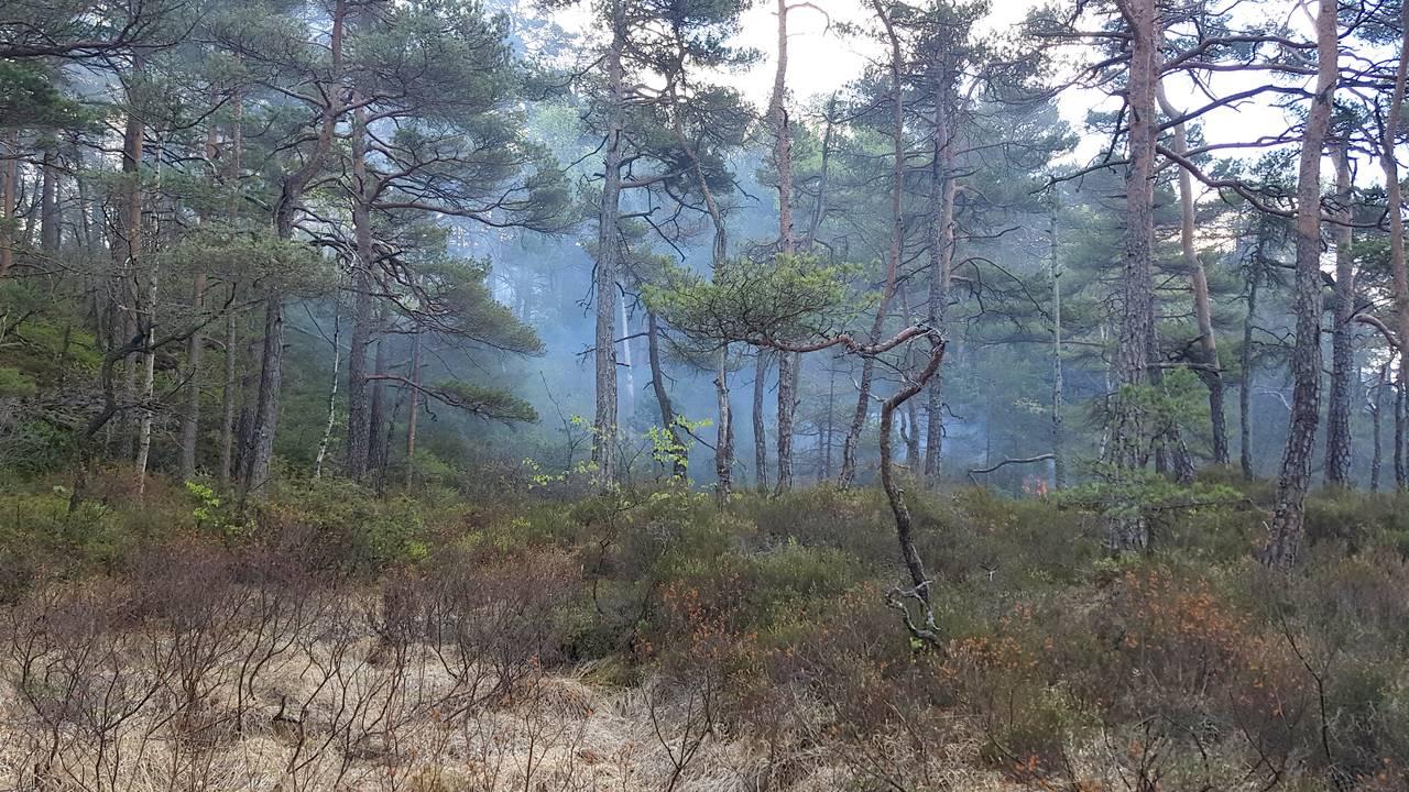 Skogbrann i Søgne